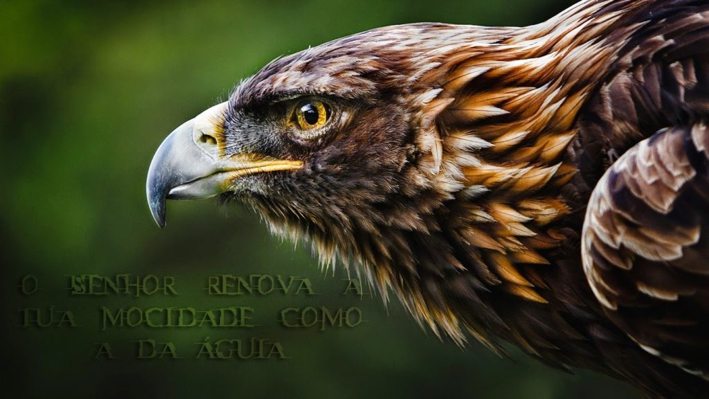 wallpaper-cristao-hd-Senhor-renova-mocidade-como-águia_1366x768
