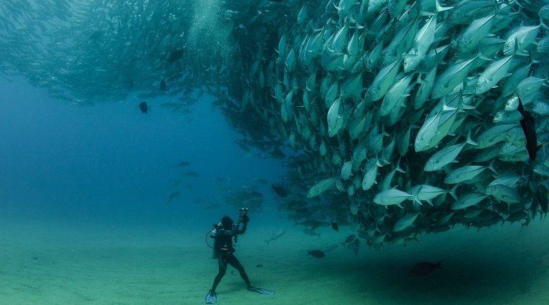 O comportamento anticolisão dos peixes