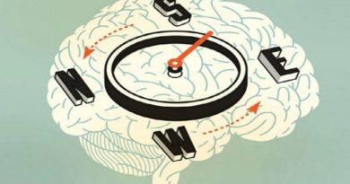 O GPS natural do Cérebro