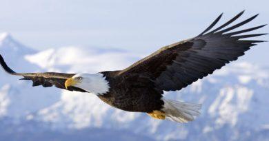 As eficientes pontas das asas das aves planadoras