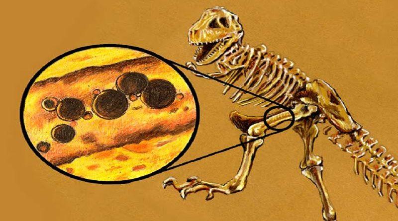 Paleobiologia e as descobertas de tecidos moles em fósseis de dinossauros de milhões de anos
