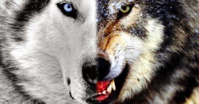 Parábolas: A luta dos dois lobos dentro de mim