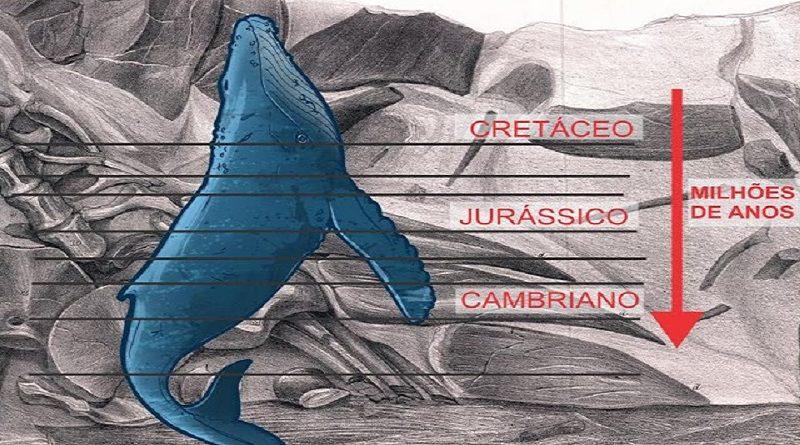 Fóssil de Baleia encontrado na vertical ultrapassando estágios geológicos