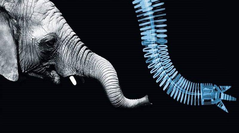 Biomimética a ciência inspirada no design inteligente da natureza