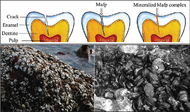 Imagem fonte: Dental Hypotheses