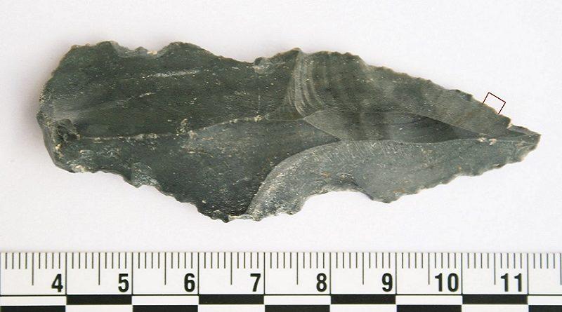 Resíduos de Proteínas Encontrados em Ferramentas de Pedra de Hominídeos