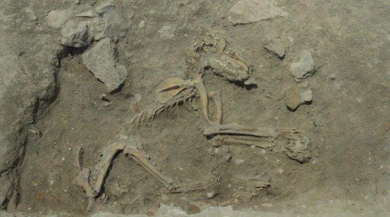 Esqueleto de um cão encontrado enterrado na antiga Gezer, datado do 9º século. Crédito da imagem: Tel Gezer escavação Project, Steven M. Ortiz
